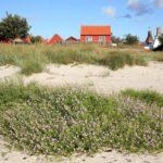 So findet ihr das für euch perfekte Ferienhaus in Dänemark